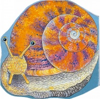 Cover image for Pocket Snail