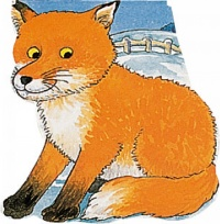 Cover image for Pocket Fox