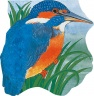 Cover image for Pocket Kingfisher